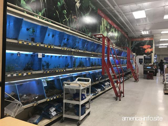 ペットスマートの魚売り場