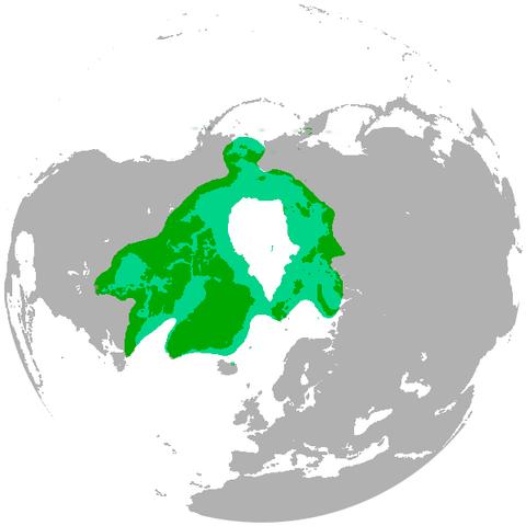 北極熊分布図